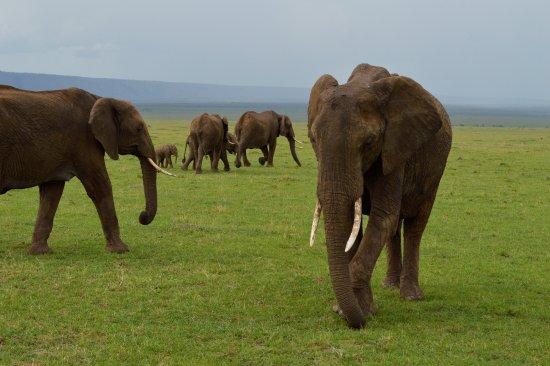 Neslo Tours and Travels Day Tours: Elefanten