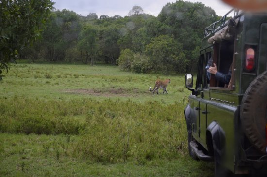 Neslo Tours and Travels Day Tours: Jeepsafari
