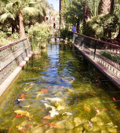 Dar Ayniwen Garden Hotel & Bird Zoo : photo6.jpg