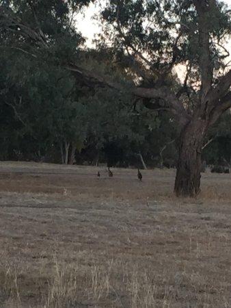 Blackall, Australia: photo0.jpg