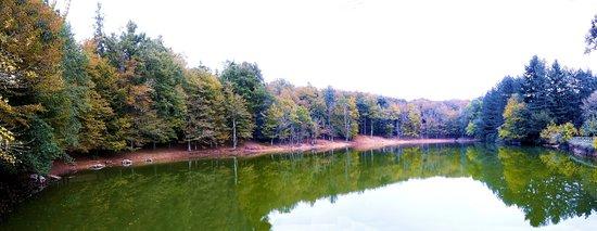 Foresta Umbra: Laghetto d'Umbra tra i boschi