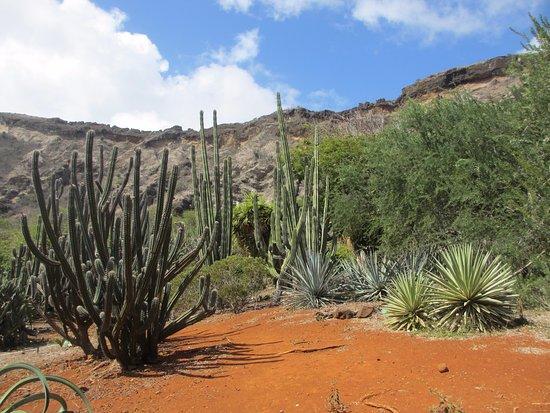 Koko Crater Botanical Garden Honolulu Hi Top Tips Before You Go With Photos Tripadvisor