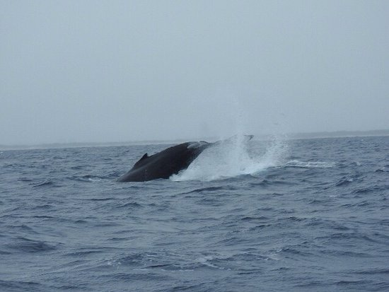 Whales in Paradise - Gold Coast Whale Watching Pty Ltd: photo3.jpg