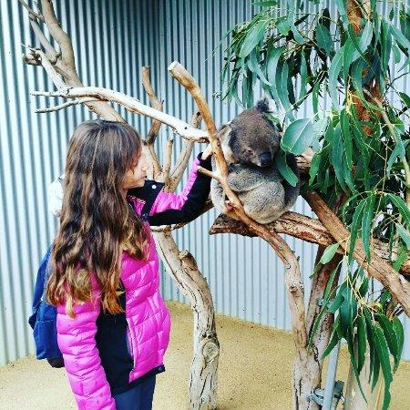 Seddon, Australia: Kangaroo Island Wildlife Park