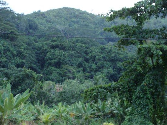 Anse La Mouche, Seychelles: Aussicht vom Hotelgelände