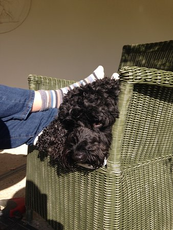 Hotel Endsleigh: one very chilled out dog