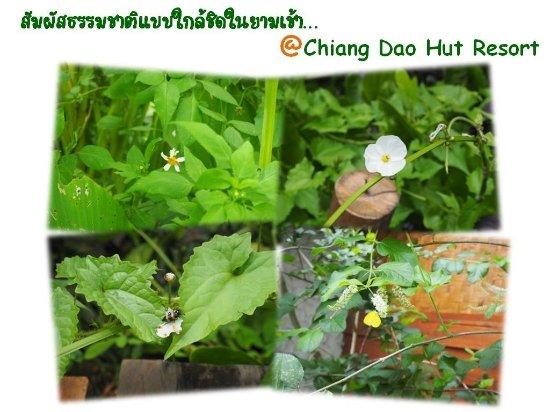 Chiang Dao Hut: จุดเด่นของเชียงดาว คือ ความงดงามของธรรมชาติที่อุดมสมบูรณ์ ท้าให้เหล่านักเดินทางเข้ามาสัมผัสด้วยต
