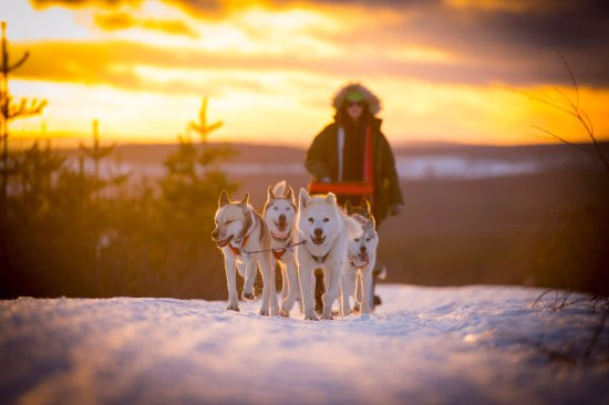 Granon, Sweden: Dogsledding in sunset