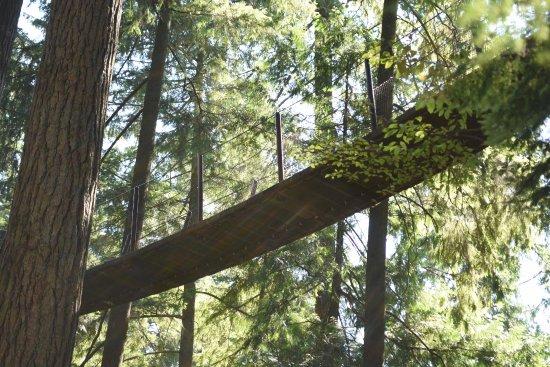 North Vancouver, Canadá: passerelle dans les arbres