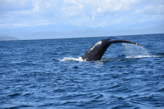 Alert Bay, Canadá: baleine