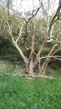Kumbhalgarh Wildlife Sanctuary: Barren tree