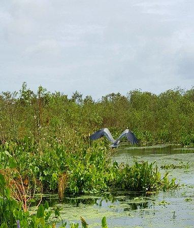 Lake Panasoffkee, FL: 20171018_152439_large.jpg