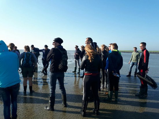Terschelling, The Netherlands: IMG-20171015-WA0101_large.jpg