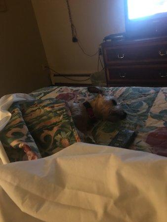 Strongsville, OH: depressing bedbug bed
