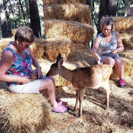 Monte Aventura, Andalucia Ecotours: Feeding 2 month-old Paco at Antonio's private reserve