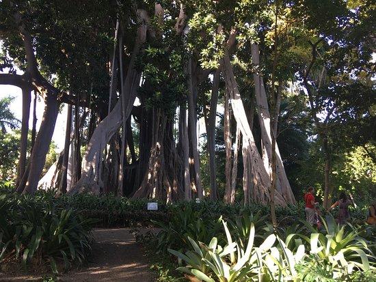 Botanical gardens jardin botanico puerto de la cruz for Hotel jardin botanico