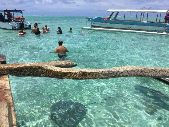 photo de pure snorkeling par reef discovery vaitape tripadvisor. Black Bedroom Furniture Sets. Home Design Ideas