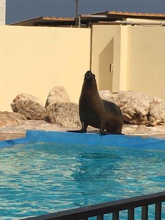 Naxxar, Malta: Sea Lion Show