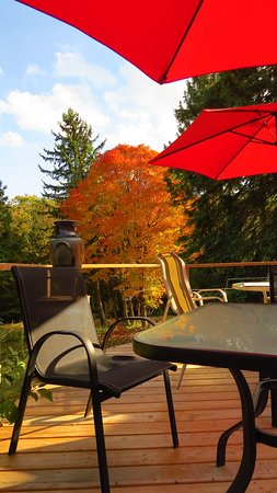 Farmhouse Pottery: Patio overlooks a small creek and beautiful trees in the valley