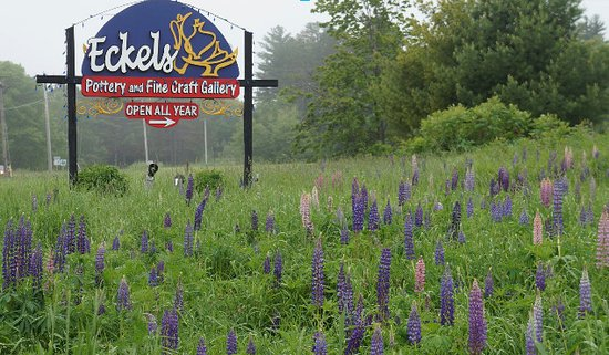 Bayfield, WI: Lupines with Sign