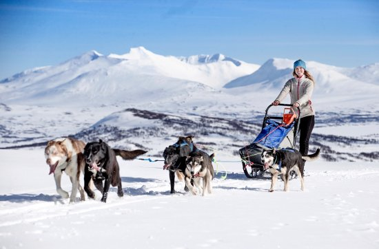 Meraker Municipality, Norway: Mushing in the mountains with spactacular view