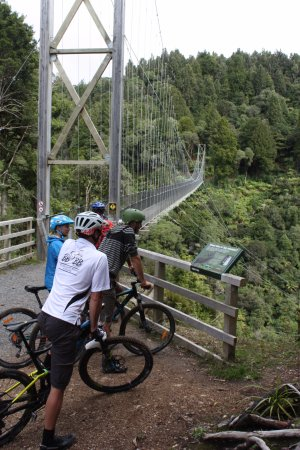 The Maramataha bridge located on the Timber trail - The longest swing bridge on a NZ cycle track