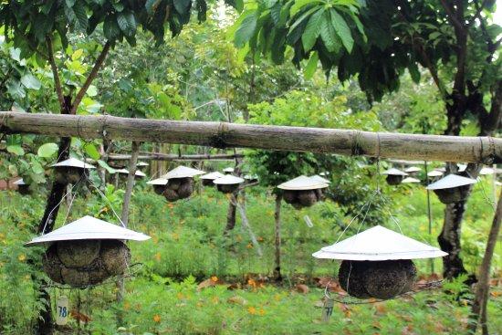 Bulusan, الفلبين: Bee farm
