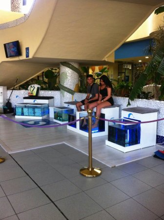 Fish Spa Doctor Fish