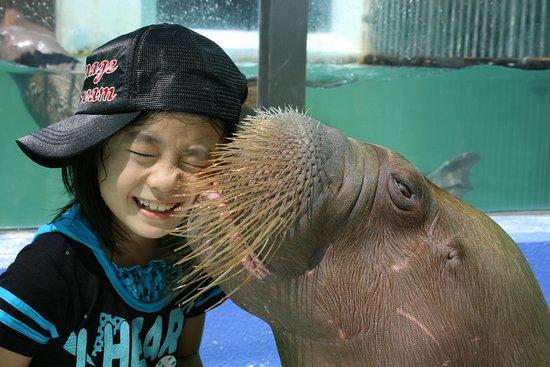 Ise Sea Paradise (Ise Meotoiwa Interactive Aquarium)