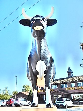 DeForest, WI: Sissy the cow.
