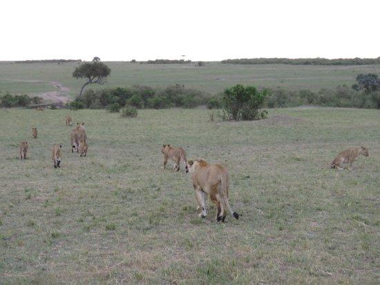 Sarova Mara Game Camp Φωτογραφία