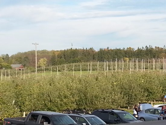 Altamont, NY: View of the parking lot and the distant trees