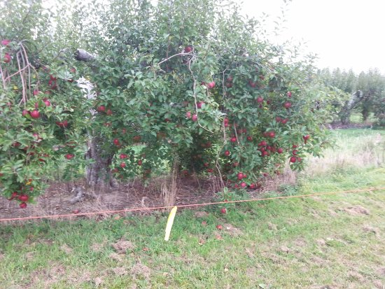 Altamont, NY: The orchard