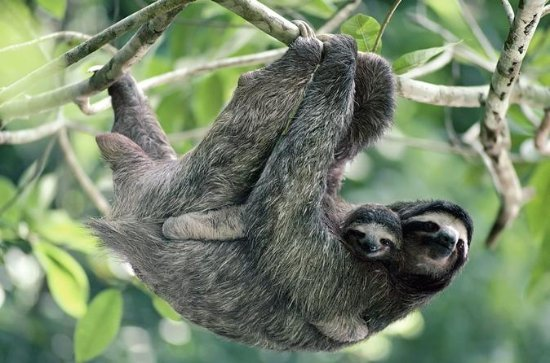 Sloths and Waterfalls Tour in the...