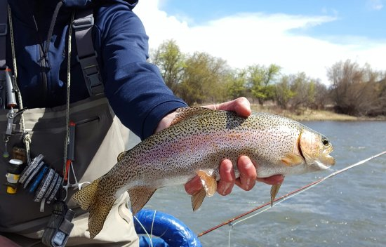 Trout Belly Anglers: getlstd_property_photo