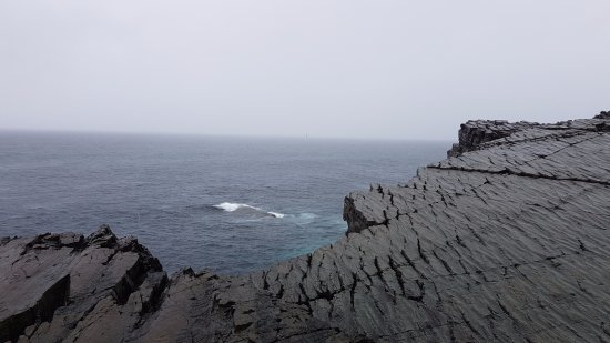 Portugal Cove, Canada: Fossil site