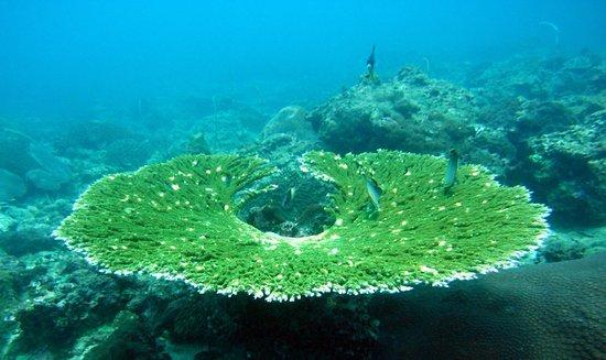 Aqua Vision Scuba Diving: Plenty of beautiful hard corals