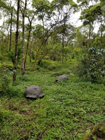 Semilla Verde Boutique Hotel: Giant tortoises on the hotel hiking trail!