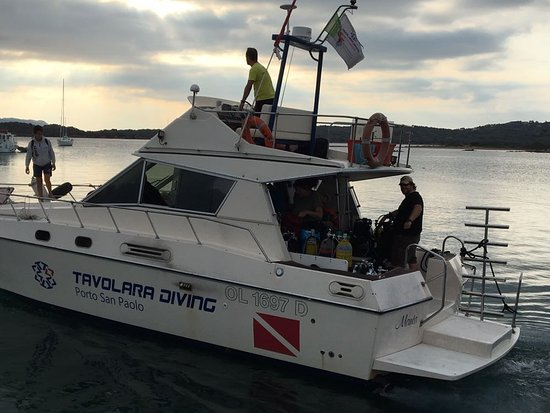 Tavolara Diving: IMG-20171012-WA0003_large.jpg