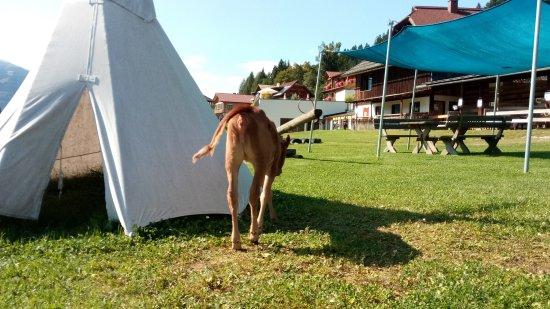 Hermagor, Austria: parco giochi davanti all'hotel con animali in libertà