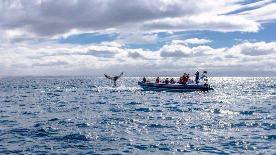 Whale Safari Iceland