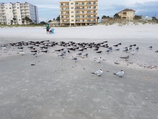 Barefoot Beach Hotel : The Florida Air Force resting on the beach!