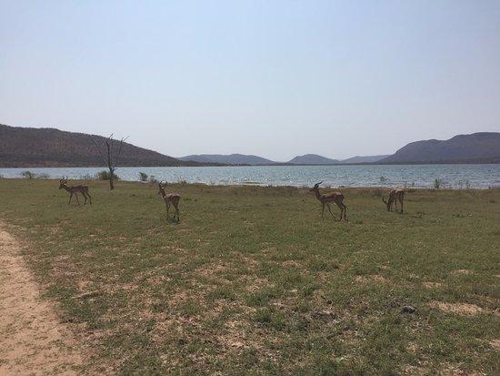 Middelburg, South Africa: Impala
