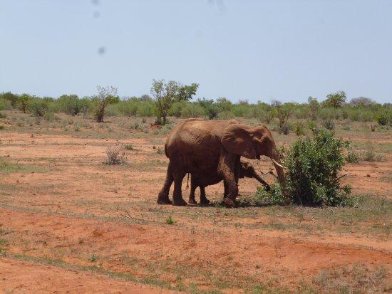 Diani Beach, Kenya : petite ballade familiale