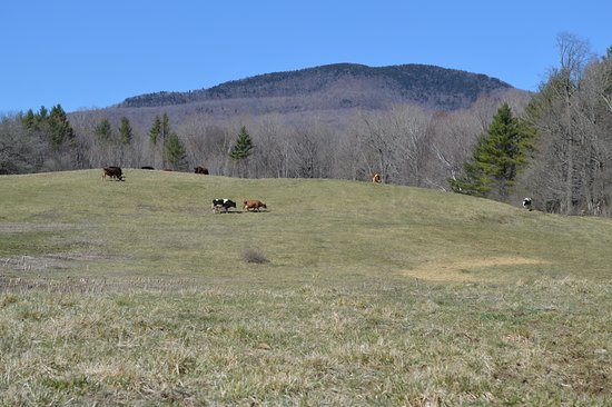 Manchester, VT: Mount Aeolus in the distance. Take a walk in the pasture to enjoy the views and our herd.