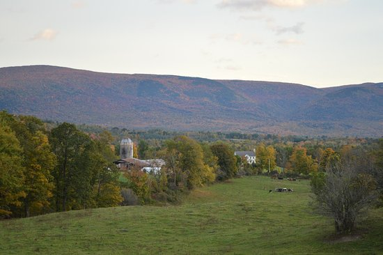 Manchester, VT: From the top of the pasture, the views are amazing. The Green Mountains in the distance are brea