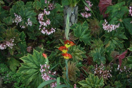 Une Fleur Originale Photographiee Dans Le Jardin Picture Of Monte