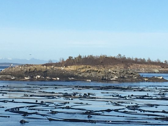 San Juan Islands, WA: photo4.jpg