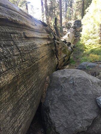 Sequoia High Sierra Camp: photo1.jpg
