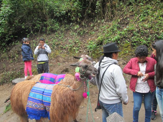 Peguche, Ecuador: locals earning living --photo hop with the fury animals